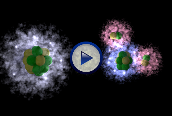 Our Biochemistry DVD begins by describing the basic structure of atoms and how ions are formed as atoms gain or lose electrons. Molecules and the covalent bonds that hold them together are then investigated. The program then explains the difference between organic and inorganic molecules, polar and non-polar molecules and how the hydrogen bonds that form between polar H2O molecules provide water with a number of unique characteristics critical to life. A look at the concept of pH and the role of buffers concludes the program.