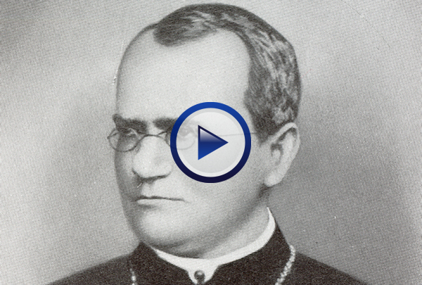 Our Mendel DVD delves into the fundamental aspects of genetic inheritance and how Mendel discovered the principles that form the foundation of modern genetics. The program first goes to Mendel's pea garden to investigate how Mendel came to propose the Laws of Dominance, Independent Assortment and Segregation and how those laws have been modified as a result of work done by those that followed Mendel. The program later explores sex-linked traits, the use of Punnet squares, incomplete dominance, codominance, and polygenic inheritance. 